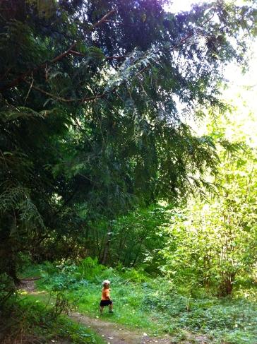 ashrunningwoods